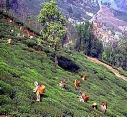 Wisata - Rajasthan Tour Paket: 7 Must-See Tempat Selama tur Rajasthan